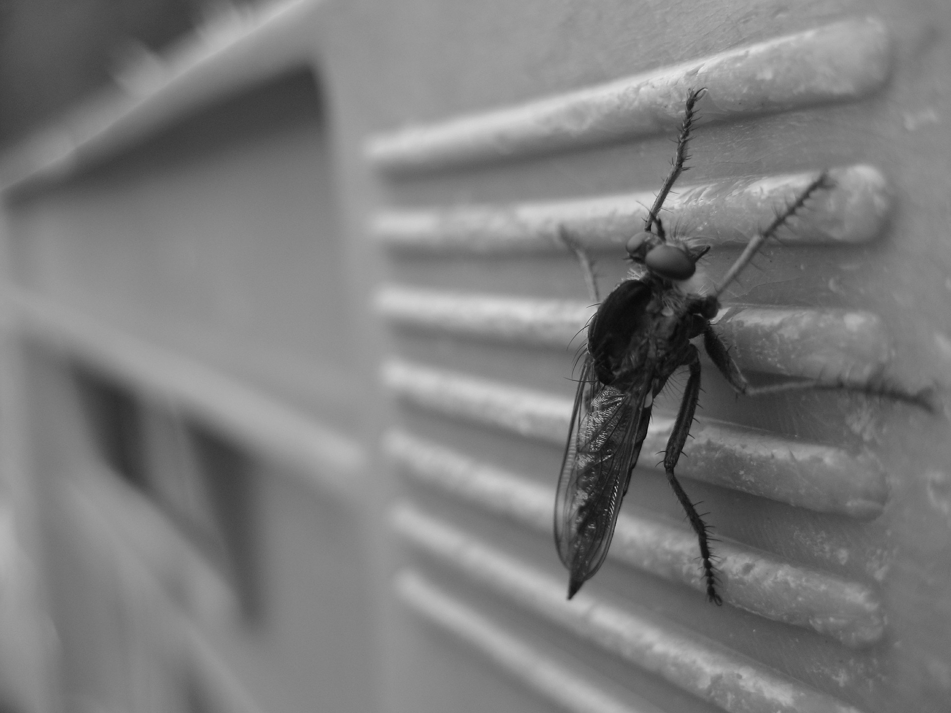 mosquito on wall